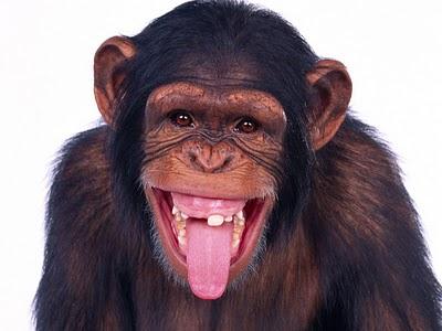 macaco-rindo.jpg